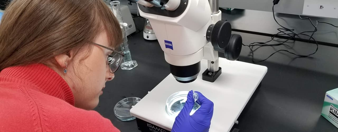 biology student looking at a sample in a Petri dish through a microscope